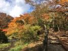 紅葉で色づく庭園散策路