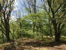 新緑の時期は庭園散策がお勧めです